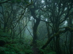 green-nature-green-forest-dark-forest-forest-wallpaper-preview