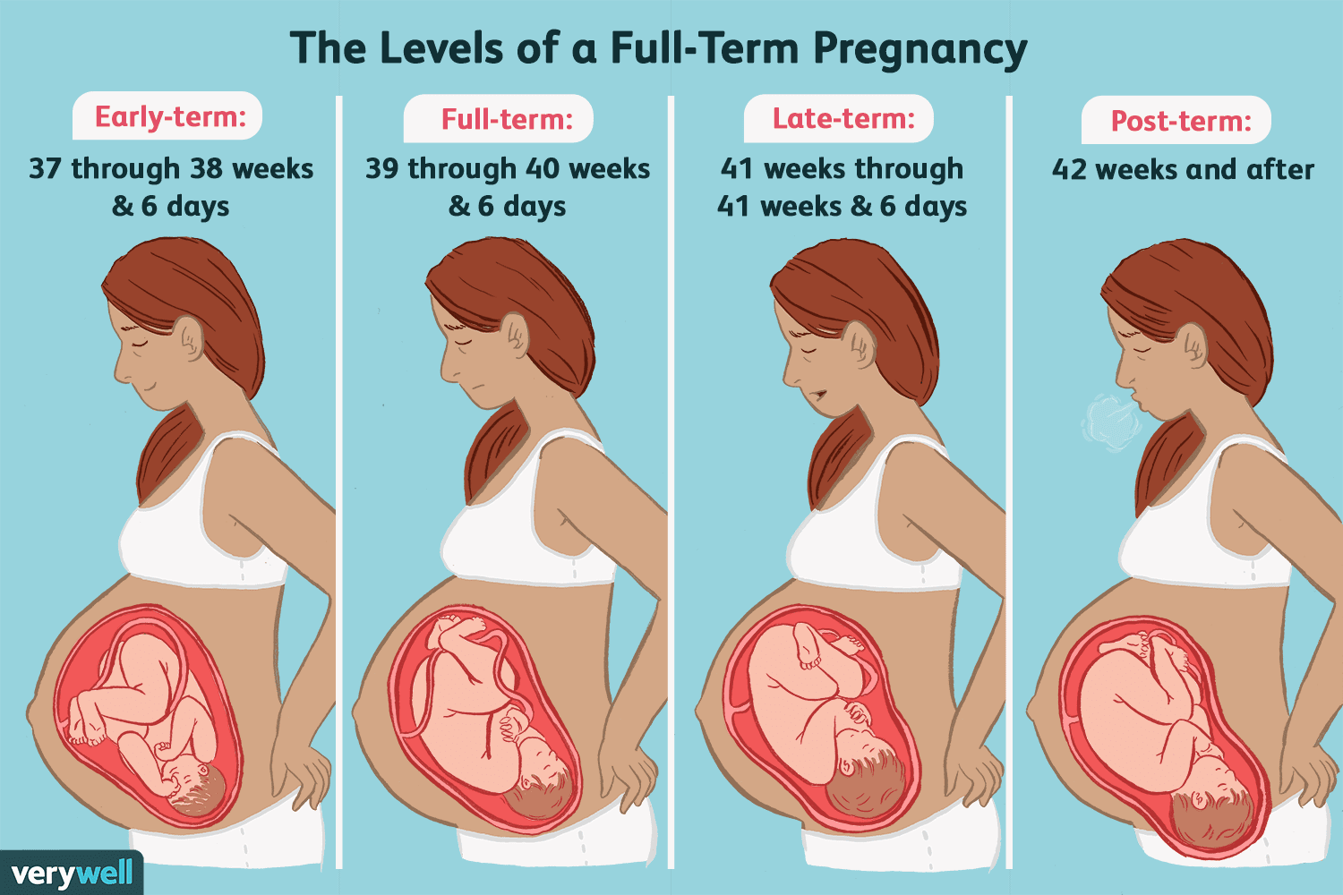 How long is a pregnancy